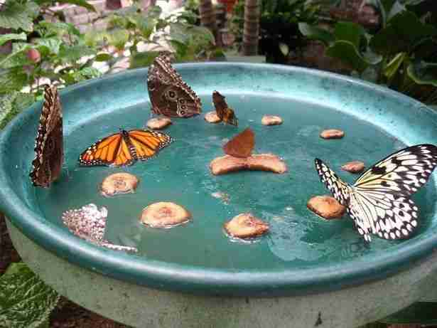 Τοποθετήστε ένα μεγάλο δοχείο με νερό και γεμίστε την αυλή με πεταλούδες