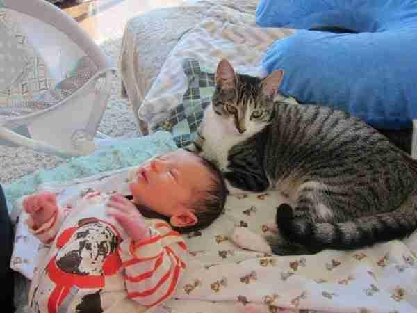 Ξέχασαν να πουν στη γάτα τους ότι έκαναν μωρό. Η αντίδρασή της.. ανεκτίμητη!