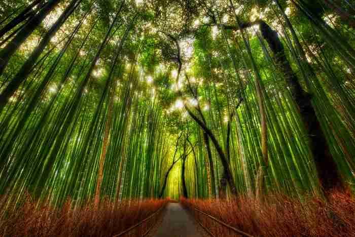 Sagano δάσος από μπαμπού, Arashiyama, Ιαπωνία