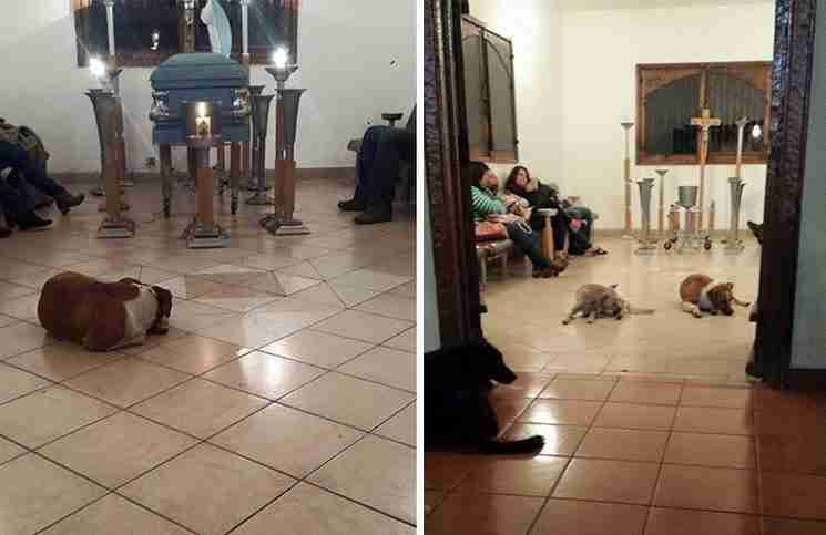 Αυτά τα αδέσποτα σκυλιά πήγαν στην εκκλησία για το πιο σπαρακτικό λόγο!