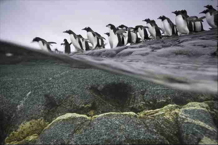Ο Νίκλεν είναι γνωστός για μερικές εκπληκτικές φωτογραφίες όπως αυτή..