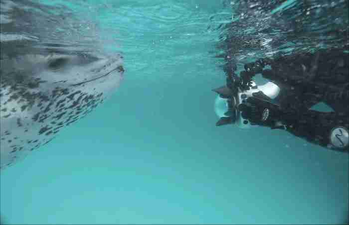 Κάποια μέρα ο Πωλ ήθελε να φωτογραφίσει φώκιες και για να το πετύχει βούτηξε στο νερό κρατώντας στο χέρι του την φωτογραφική του μηχανή.