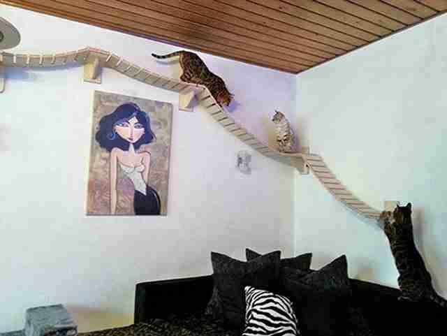 Ένας παιχνιδότοπος στον τοίχο για τις γάτες.