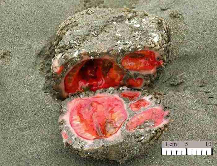 Ζωντανοί βράχοι