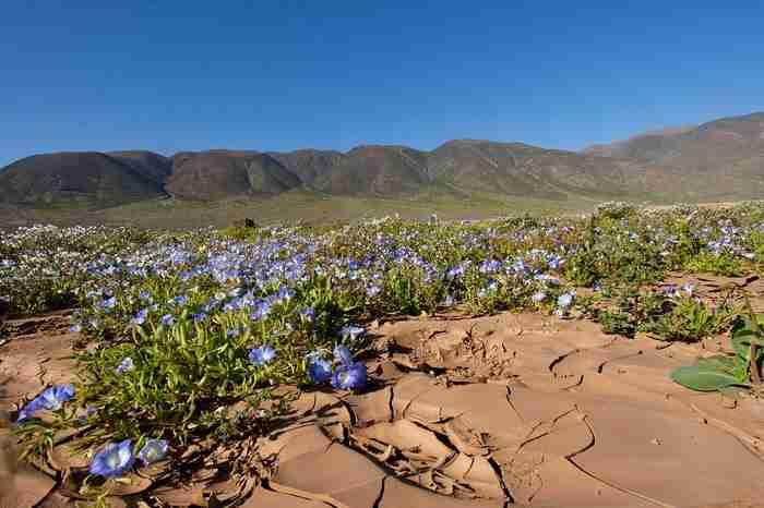 Η έρημος που ανθίζει