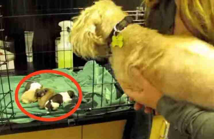 Πήραν από αυτή το σκυλίτσα τα παιδιά της. Παρακολουθήστε την αντίδρασή της όταν της τα φέρνουν πίσω..