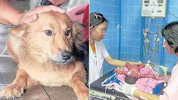 Αυτό το σκυλί πήγε στο σπίτι με μια σακούλα στο στόμα. Δεν μπορείτε να φανταστείτε τι είχε μέσα!