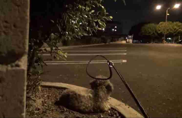 Μια άγνωστη πλησιάζει αυτό το αδέσποτο σκυλάκι. Την ώρα όμως που του περνάει το κολάρο..