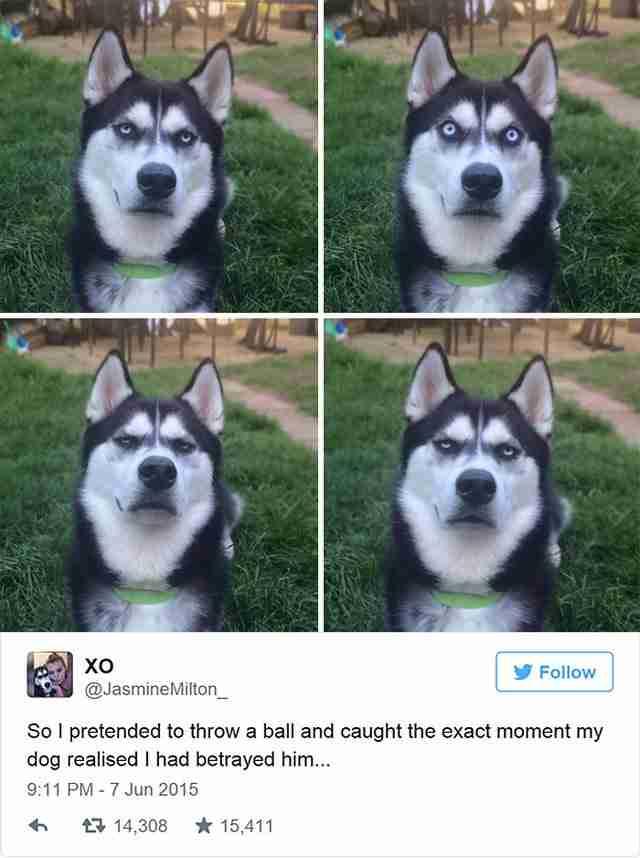 Προσποιείται ότι θα ρίξει το μπαλάκι. Δείτε τώρα την έκφραση του σκύλου της..
