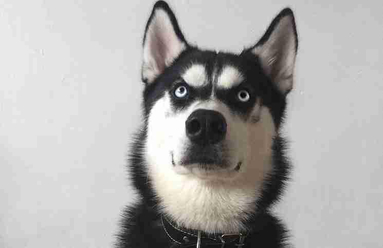 Προσποιείται ότι θα ρίξει το μπαλάκι και φωτογραφίζει το σκύλο της μόλις συνειδητοποιεί ότι προδόθηκε