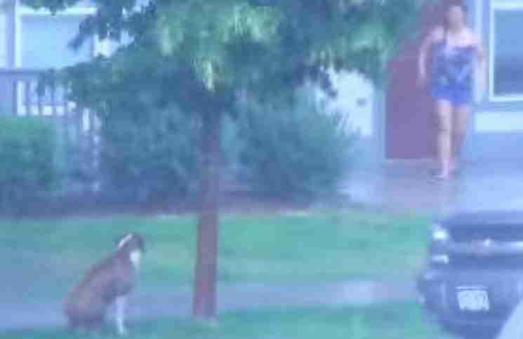 Ένα σκυλί ήταν δεμένο σε ένα δέντρο κατά τη διάρκεια μιας καταιγίδας. Τι συνέβη στη συνέχεια; Ένα θαύμα!