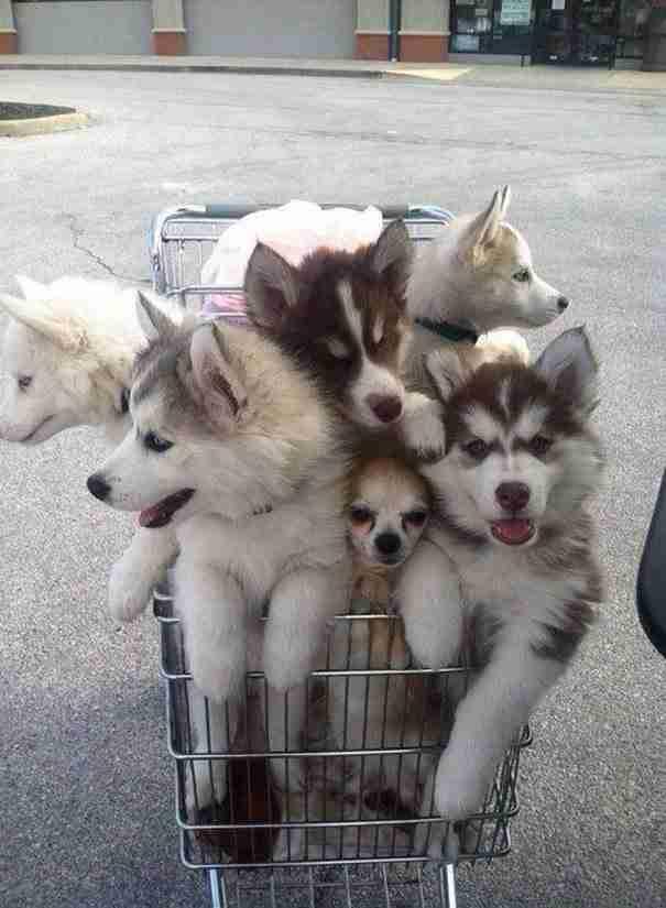 Αυτή η οικογένεια που επιστρέφει από το σουπερμάρκετ!