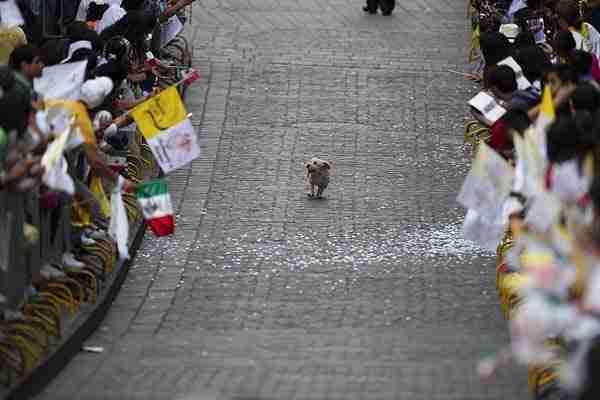 Αυτό το σκυλάκι που νομίζει ότι όλοι αυτοί οι άνθρωποι ήρθαν για  να το δουν να τερματίζει!