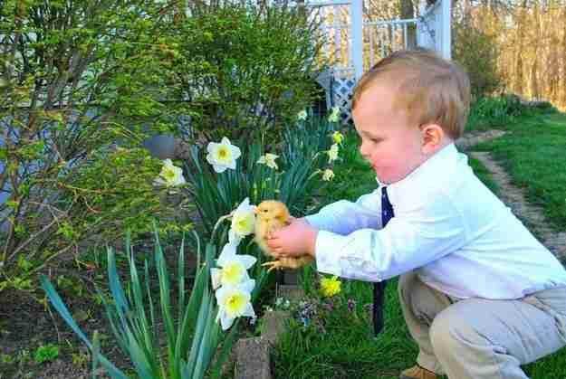 Αυτό το κοτοπουλάκι που μυρίζει ένα λουλούδι για πρώτη φορά.