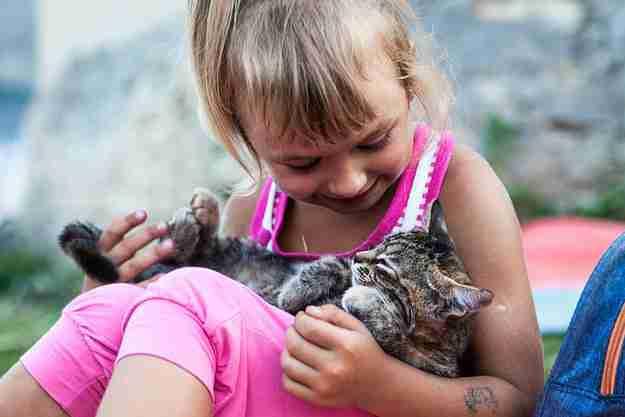 Αυτό το γατάκι που κάθεται αναπαυτικά στην αγκαλιά της καλύτερης του φίλης!
