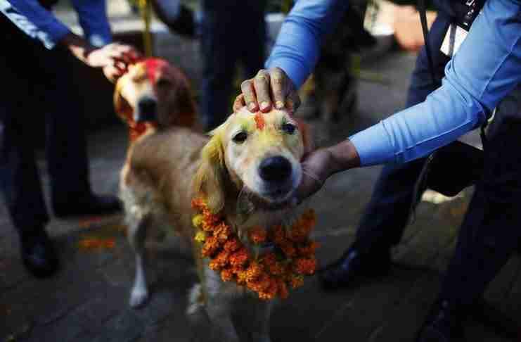 Υπάρχει ένα ετήσιο φεστιβάλ στο Νεπάλ στο οποίο ευχαριστούν τους σκύλους γιατί είναι φίλοι μας