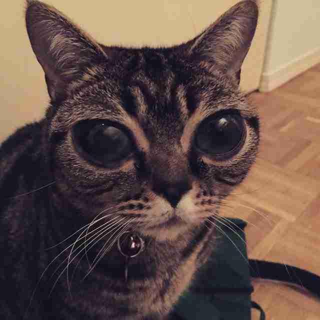 """Αυτή η γάτα με τα παράξενα μάτια μοιάζει """"εξωγήινη"""". Είναι όμως πολύ αληθινή!"""
