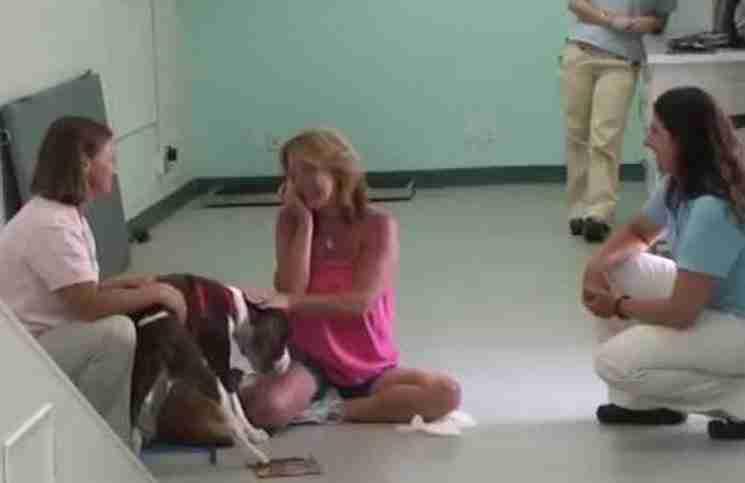 Πήγε να παραλάβει τον παραπληγικό σκύλο της. Αυτό που αντίκρισε δεν θα μπορούσε να το περιμένει