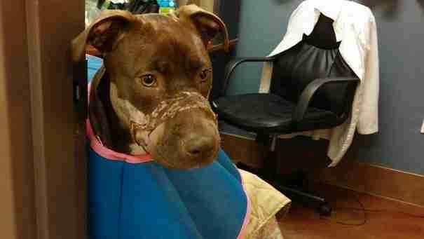 Αυτό το σκυλί βρέθηκε με το στόμα του σφραγισμένο με ταινία. Δείτε το πως είναι σήμερα..