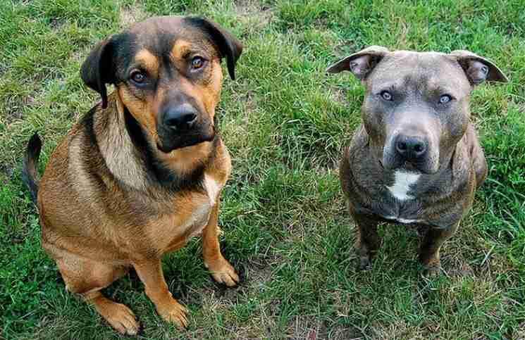 Μια γυναίκα βρήκε 2 αδέσποτα σκυλιά και τα διέσωσε. Αμέσως μετά έστειλε μήνυμα στον πρώην ιδιοκτήτη τους…