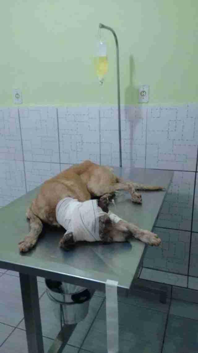 Οι γιατροί που τον φρόντισαν, έδρασαν άμεσα προκειμένου να καταπολεμήσουν τυχόν λοιμώξεις.