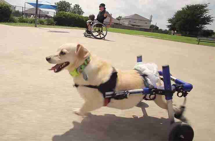 Κανείς δεν ήθελε να υιοθετήσει αυτό το σκυλί. Μέχρι που κάποιος με παρόμοιο πρόβλημα του έδωσε μια ευκαιρία