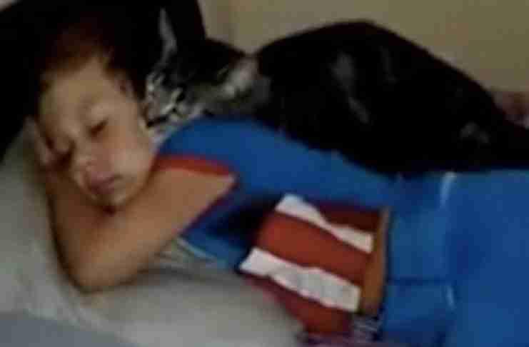 Μια γάτα είχε να δει αυτό το μικρό αγόρι για μέρες. Η αντίδραση της είναι υπέροχη!