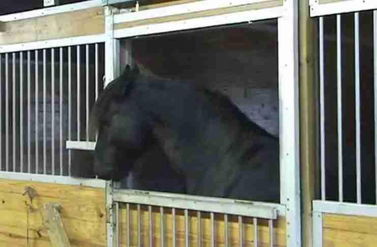 Όταν είδαν ότι τα άλογα έφευγαν κάθε βράδυ από το στάβλο έβαλαν κάμερα για να δουν τι συμβαίνει