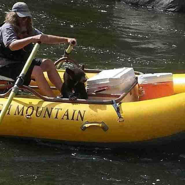 Ώσπου ο Allen αποφάσισε να πλησιάσει με τη βάρκα του το αρκουδάκι για να προσπαθήσει να εκτιμήσει την κατάσταση.