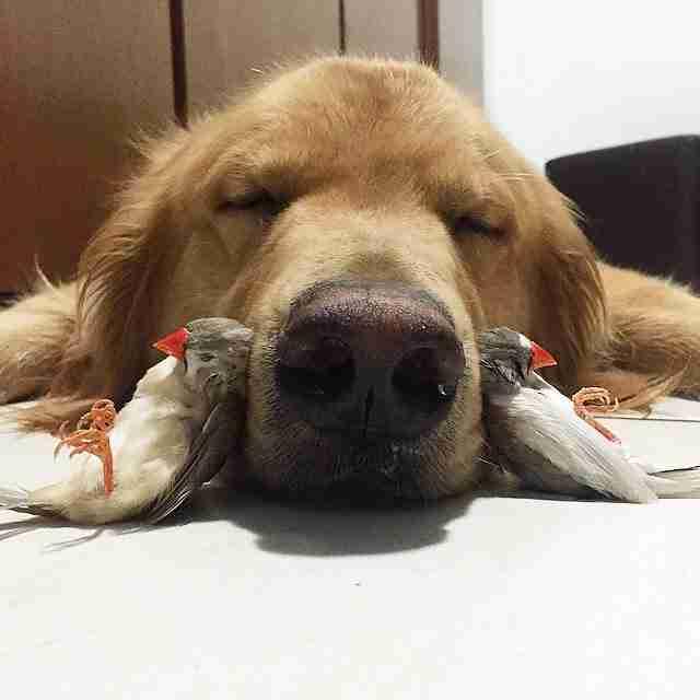 Ένας σκύλος, 8 πουλιά και ένα χάμστερ είναι η πιο ασυνήθιστη παρέα που έχετε δει ποτέ!