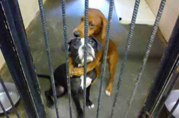 Αυτή η φωτογραφία δυο σκύλων που αγκαλιάζονται σε ένα καταφύγιο τους έσωσε τη ζωή!