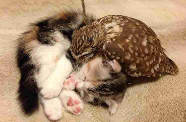 Έχετε την εντύπωση ότι γάτες και πτηνά δεν μπορούν να ζήσουν μαζί; Δείτε αυτά τα φιλαράκια!