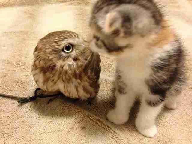 Έχετε την εντύπωση ότι οι γάτες και τα πτηνά δεν τα πάνε καλά; Δείτε αυτά τα φιλαράκια!