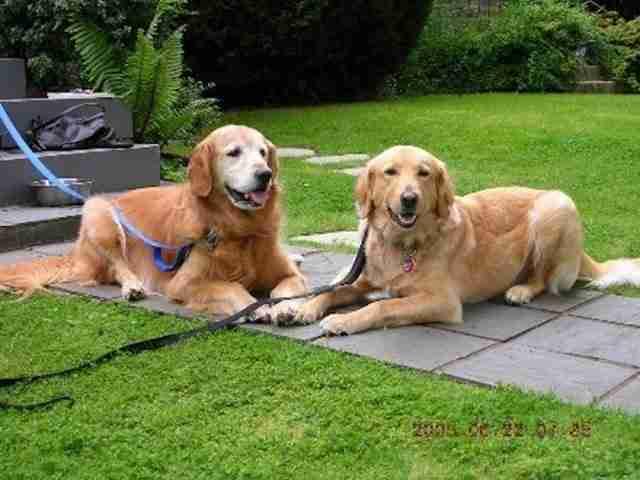 Υιοθέτησαν ακόμη και ένα άλλο σκυλάκι για να έχει παρέα.