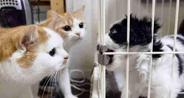 Μια οικογένεια υιοθέτησε ένα μικρό κουτάβι. Δείτε τώρα πως αντέδρασαν οι γάτες τους!