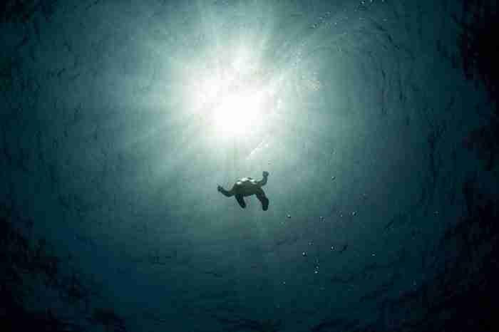 26 εκπληκτικές φωτογραφίες από τον διαγωνισμό National Geographic Traveler 2015