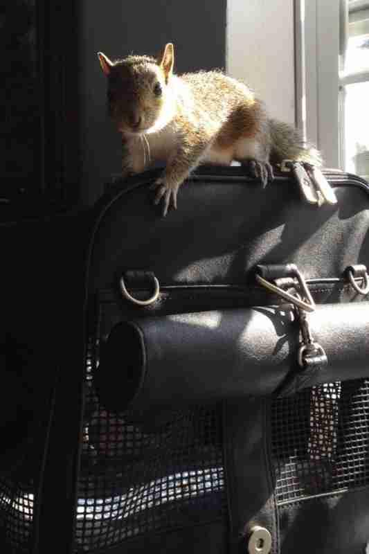 Σήμερα ο Zip είναι ένας όμορφος, υπερκινητικός σκίουρος και έχει αναπτύξει τη δική του προσωπικότητα!