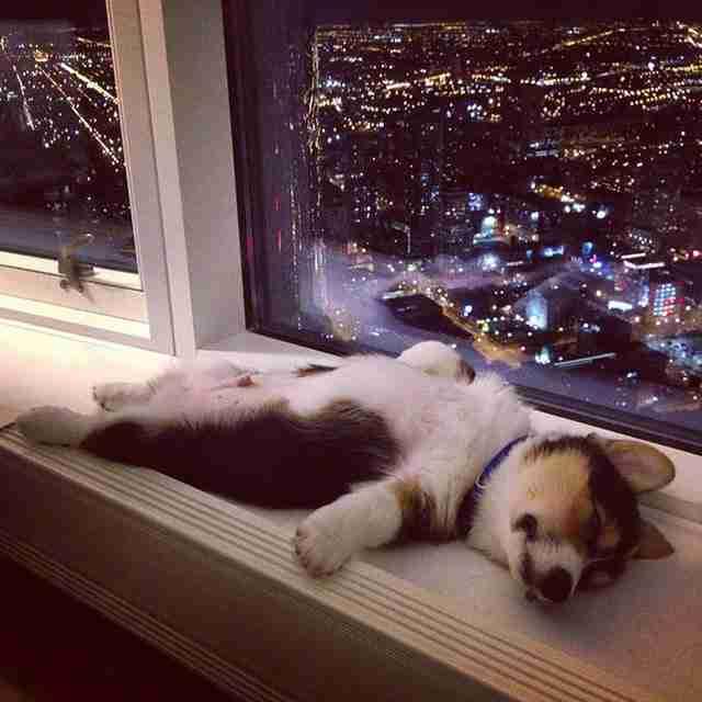 25 φωτογραφίες που αποδεικνύουν ότι τα κουτάβια μπορούν να κοιμηθούν οπουδήποτε!