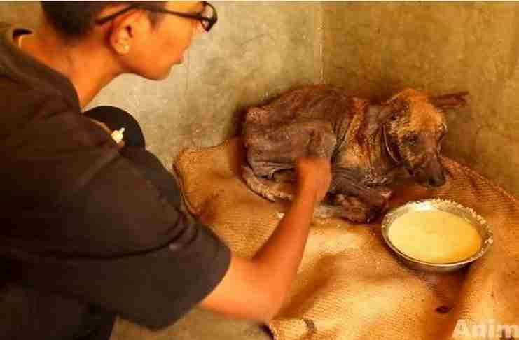 Όταν βρήκαν αυτό το σκυλάκι ήταν σε τραγική κατάσταση. Πρέπει να δείτε τι κάνει λίγη αγάπη..