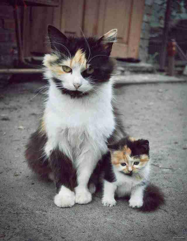 22 ζώα μητέρες που είναι εξίσου τρομοκρατημένες με εσάς..