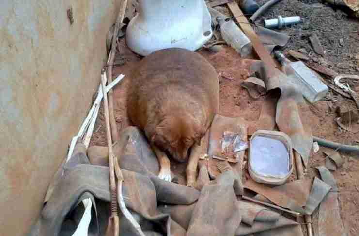 Βρήκε ένα αδέσποτο σκυλί που δεν έμοιαζε φυσιολογικό. Προσέξτε το βλέμμα του όταν έκανε για πρώτη φορά μπάνιο