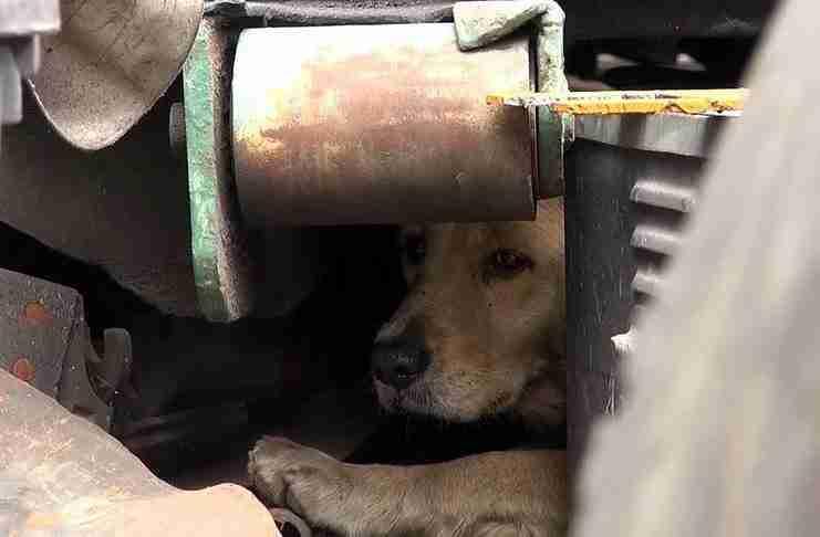 Ένα αδέσποτο σκυλί πανικοβάλλεται όταν προσπαθούν να το σώσουν. Αλλά δείτε πως αντιδρά όταν νιώθει ασφάλεια!