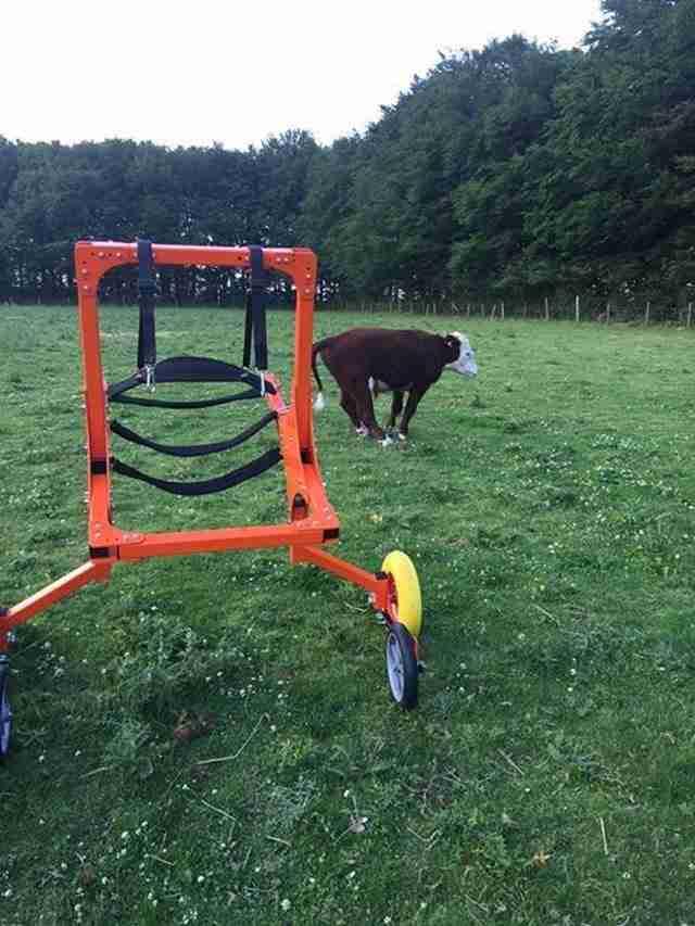 Τελικά κατάφεραν να κατασκευάσουν μια ειδικά προσαρμοσμένη αναπηρική καρέκλα που τον βοηθάει να κινείται.