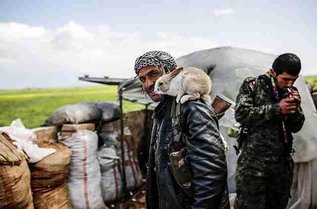 Σύριος μαχητής Peshmerga με ένα λαγουδάκι στον ώμο του.