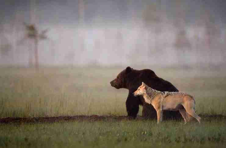 """""""Κανείς δεν μπορεί να γνωρίζει ακριβώς το γιατί ή το πώς ο νεαρός λύκος και η αρκούδα έγιναν φίλοι"""""""