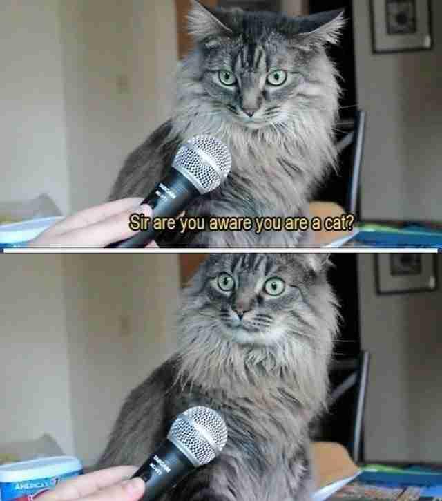 """Κύριε, γνωρίζετε ότι είστε μια γάτα;"""".. και η απάντηση!"""