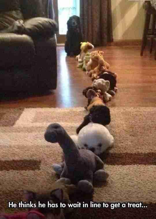 Αυτό το σκυλάκι (το βλέπετε;) που περιμένει στη σειρά για να πάρει τις λιχουδιές του!