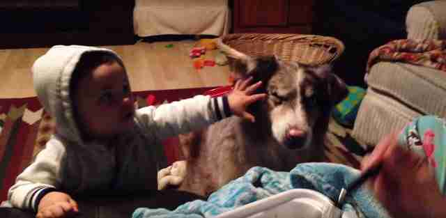 """Θέλει να δώσει στο μωρό της λιχουδιές αρκεί να πει """"μαμά"""". Το σκυλάκι όμως το είπε πρώτο!"""