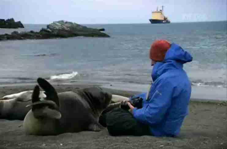 Ένας άνδρας κάθισε κοντά σε μια μικρή φώκια. Αυτό που ακολούθησε δεν θα μπορούσε ποτέ να το φανταστεί.