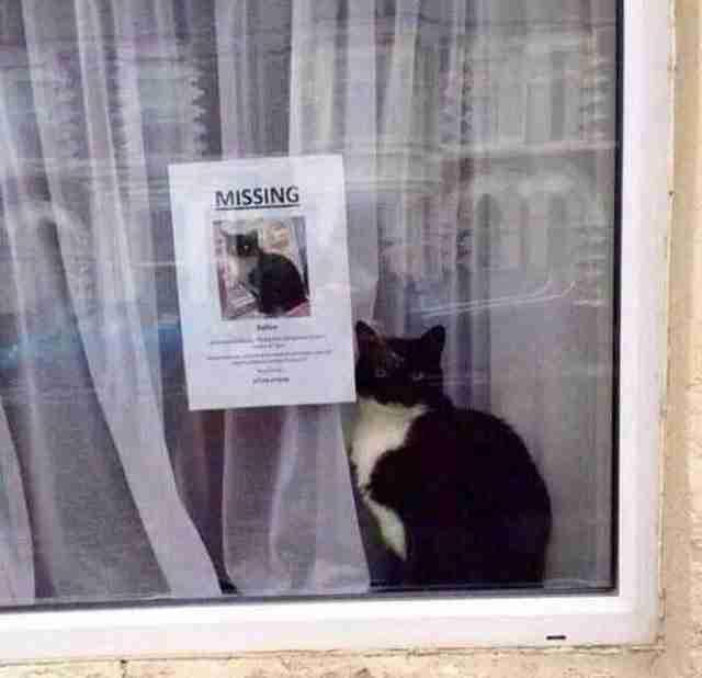 """Μια """"χαμένη"""" γάτα βρέθηκε ακριβώς δίπλα στην αφίσα που την αναζητούσε!"""